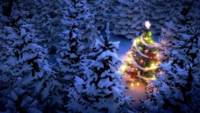 Grantræet som juletræ