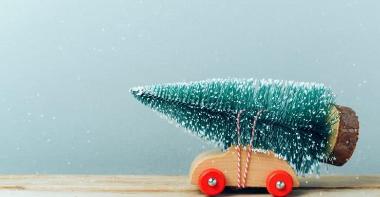 Juletræets liv