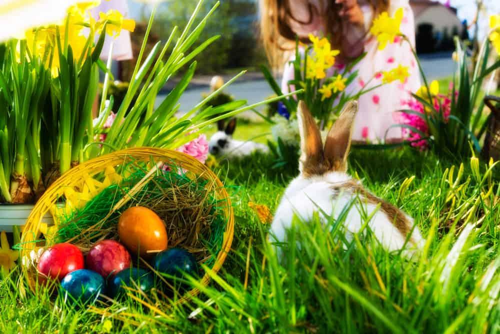 Photo of Sådan falder påsken i år – Påskekalender