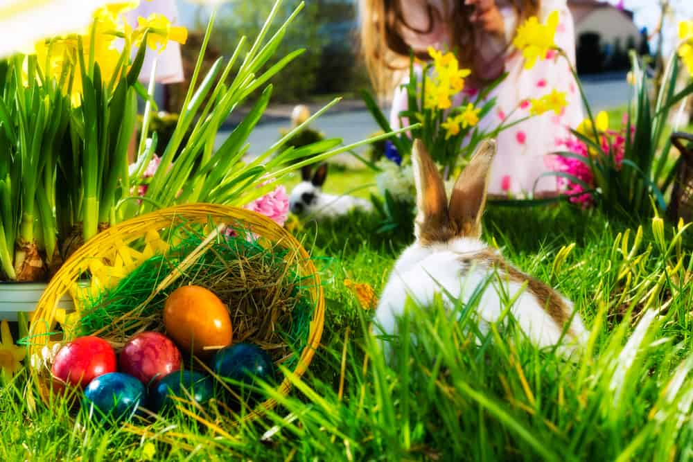 Påskehare med påskeæg og påskeliljer